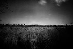 Película Ilford PanFPlus 50. Cámara Horseman 980. Pinhole. Estenopeica. Imagen 03. Delta del Llobregat. Barcelona. 27-09-2018 (Usitu) Tags: barcelona españa deltadelllobregat horseman blancoynegro estenopeica pinhole paisajeindustrial