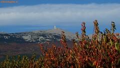 C'est l'automne, les cerisiers présentent leur plus belle couleur devant le mont Ventoux (Vaucluse - 8 octobre 2017) (Carnets d'un observateur de la nature du Sud de la) Tags: montventoux nature cerisier vaucluse provence