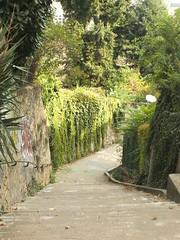 DSCF9975 (Benoit Vellieux) Tags: lyon france 4èmearrondissement 4thdistrict croixrousse escalier stair staircase stairway treppe arbre baum tree ruelle gasse alley narrowstreet montéebonafous