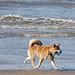 Hond aan het strand