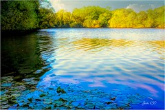 Oh Happy Day (Jan 130) Tags: jan130 lake reflections autumn2018 plantsbrooknaturereserve suttoncoldfield birmingham englanduk digitalpainting waterlilies