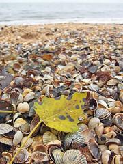98884198 (aniaerm) Tags: sea coastalfinds sand