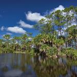 Moon over Pond in Babcock Wildlife Management Area, Punta Gorda, Florida thumbnail