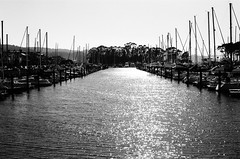 Port / Marina Blvd - San Francisco, Californie (Ludovic Macioszczyk Photography) Tags: port marina blvd san francisco californie nikon fm 135 kodak tmax 400 iso mai 2018 étatsunis © ludovic macioszczyk usa film argentique lumière 35mm noir et blanc monochrome california voyage vacances grain bay area sf street view amérique district photography analog ville city life