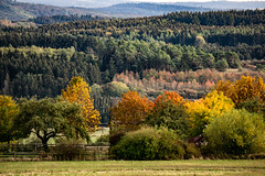 every single tree (Wöwwesch) Tags: fall autumn leaves colors colours trees landscape interestin walk alone forest charakter