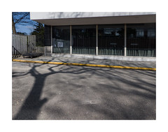 street (godelieve b) Tags: street urban trees arbres lines diagonale fenêtre window shadow ombres brussels