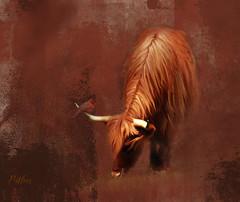 Highland Cow with Cardinal.. (Patlees) Tags: highlandcow bird textured dt texturaltuesday