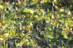 Autumn leaves reflection (Dave_S.) Tags: howick northumberland england north uk gb united kingdom great britain tree trees leaf leaves autumn autumnal colours colors nikon d3200 reflection water abstract