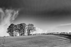 Trees at Harthill (andybam1955) Tags: harthill fields landscape autumn rural monochrome yorkshire clouds