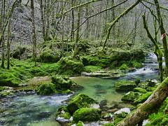 Gorges de Covatannaz (images1219) Tags: rivière eau mousse forêt