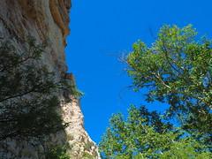 P6299485 (carriemoranphotos) Tags: arizona sedona redrocks trees travel sunrise sunset red usa roadtrip