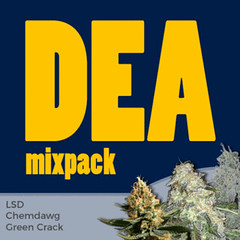 dea-mixpack-marijuana-seeds-ilgm_large (Watcher1999) Tags: thc weed cannabis chemdawg green crack great buds lsd feminized medical marijuana california seeds anxiety growing strain plant weeds smoking ganja legalize it