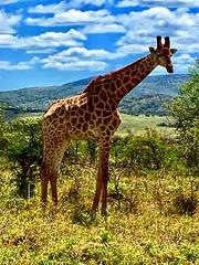 IMG-20181005-WA0007 (NYS Department of Environmental Conservation) Tags: dle encon beci dec nysdec africatrip southafrica elephants poaching ivory csi forensictraining wtf wildtomorrowfund
