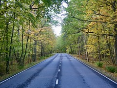 Autumn Road (docwiththecamera) Tags: road autumn colorful tree forest sky leaf moisture