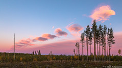Smoke signals from Russia (NI5A6680LR) (pohjoma) Tags: iltaaurinko iltarusko maisema pilvet canoneos5dmarkiv finland canonef24105mmf4lisusm landscape clouds scenery woodlands autumn fall autumncolors evening nature taivas pilvi