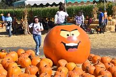 DSC_2559 (earthdog) Tags: 2018 needstags needstitle nikon d5600 nikond5600 18300mmf3563 fall autumn pumpkinpatch spinafarms farm