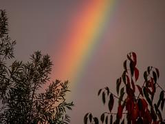 Regenbogen am Morgen 01 (p.schmal) Tags: olympuspenf hamburg farmsenberne regenbogen rainbow