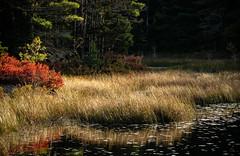 Acadia National Park 2018 (willsdad48) Tags: acadianationalpark maine seascapes seacoast atlantic ocean downeast travel travelphotography hiking fujifilm xt3 wideangle nature nationalparks
