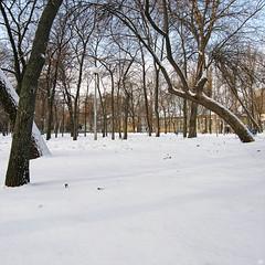 46543904 (aniaerm) Tags: snow ice frost