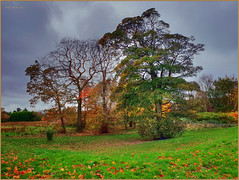 Forever Autumn (Billy McDonald) Tags: hdr glasgow samsunggalaxys9 foreverautumn springburn springburnpark colour trees