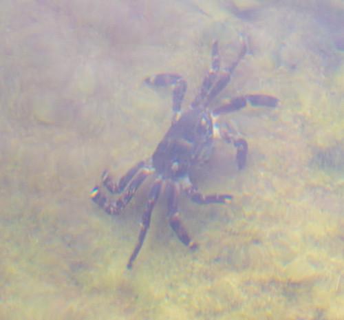 Crab ©  Andrey