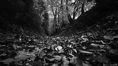 L'automne, first day. (Un jour en France) Tags: automne forêt monochrome arbre canonef1635mmf28liiusm bois feuille noiretblanc noiretblancfrance canoneos6dmarkii canon eos 6d