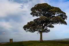 Cage & Tree (eskayfoto) Tags: canon eos 700d t5i rebel canon700d canoneos700d rebelt5i canonrebelt5i sk201809192855editlr sk201809192855 lightroom lyme lymepark lymehall cheshire disley park stockport countryside cage folly lymecage thecage tree distance perspective nationaltrust peakdistrict building architecture huntinglodge hunting lodge gradeiilistedbuilding lockup tower hall sky grainy