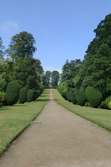 Montacute House (carolyngifford) Tags: montacutehouse yeovil somerset nationaltrust drive avenue yews