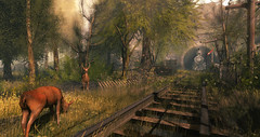 Early Morning (Layla Falconvale) Tags: deer train sl slphotographer