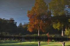 River Thames Bray Maidenhead Cliveden 21 October 2018 113 (paul_appleyard) Tags: river thames cliveden october 2018 autumn fall glorious day leaves colours colors reflections reflected inverted upside down tree