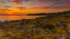 Fiery Seal Cove sunset at low tide (johnny4eyes1) Tags: epiclight redsky goldenhour landscape sunset acadianationalpark sundown maine dusk seaweed mountdesertisland travel lowtide wideangle downeast mtdesertisland sealcove barharbor