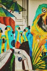 Graz' underground (baecki) Tags: graz austria österreich brücke papagei farbe bunt color