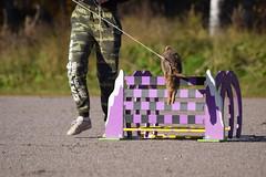 DSC_0102 (klawerjanina) Tags: bunnyjump bunny kani kaniestekisat kanin kaninhoppning
