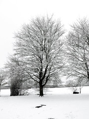 Winter tree (cats_in_blue) Tags: tree snow winter