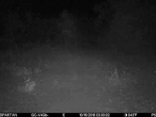 2018-10-16 03:00:02 - Crystal Creek 1