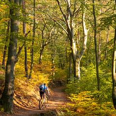 Herbstmodus an (MadCyborg) Tags: fuji fujifilm singlespeed xt20 mountainbike mtb mtbisok