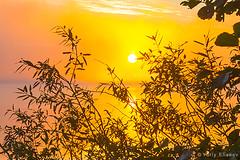 Golden morning (yuriye) Tags: yuriye yuryelysee sun circle morning light summer lake water reflection silhouette tree leaves landscape nature horisont sky gold warm orange небо отражение солнце рассвет золото золотой листья вода озеро russia россия