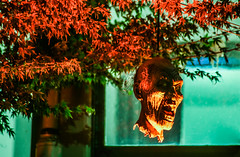 severed heads ll (pbo31) Tags: bayarea eastbay alamedacounty california october 2018 fall nikon d810 color night dark boury pbo31 halloween holiday alameda decorations black orange green ghost display dead head tree fluorescent