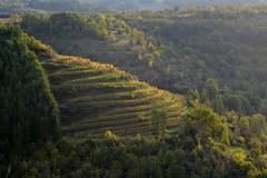 Vignoble de Marcillac (Michel Seguret Thanks for 13.6 M views !!!) Tags: france aveyron rouergue michelseguret nikon d800 pro