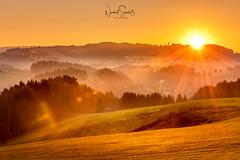 Sonnenaufgang im Morgennebel auf Gut Feuerschwendt, Bayrischer Wald. (nigel_xf) Tags: bayern bayrischerwald bavarianforrest sunrise sonnenaufgang gutfeuerschwendt nebel morgennebel foggy sun rays nigel nigelxf vsfototeam nikon d850