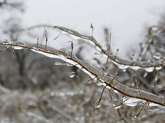 19063012 (aniaerm) Tags: snow ice frost