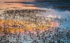 Colours (Ignacio Ferre) Tags: colores colours agua water embalsedesantillana santillanareservoir embalse reservoir lago lake manzanareselreal madrid españa spain nikon sunset puestadesol anochecer