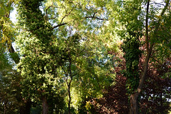 "1PRO_1181 ""Every minute I get weaker While in the jungle they grow strong"" (Radu Pavel) Tags: radu radupavel pavel fotononstop cosmos ©radupavelallrightsreserved ©radupavelallerechtevorbehalten ©radupaveltodoslosderechosreservados ©radupavel版権所有 nature natur naturaleza 自然 colours farben colores 色 forest wald bosque 森林 tree baum árbol 木 outdoor alairelibre imfreien ルーマニア world welt mundo 世界 travel reisen viaje 旅行 românia romania rumänien rumania 羅馬尼亜 light licht luz 光 ecotourism explore 2018"