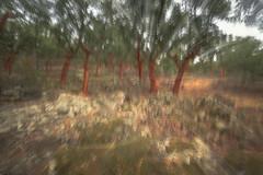 R18_0654  iso 125 0,25 sec F 22 (ronald groenendijk) Tags: cronaldgroenendijk 2018 rgflickrrg copyrightronaldgroenendijk corkoak extremadura kurkeik landscape nature natuur natuurfotografie oak outdoor spain spanje tree wood
