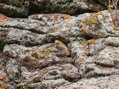 Lichens (Boulder Flying Circus Birders) Tags: lichens colorado boulder wildbirdboulder wildbirdcolorado boulderflyingcircusbirders freebirdwalk saturdaymorningbirders bouldercounty clarkanderson