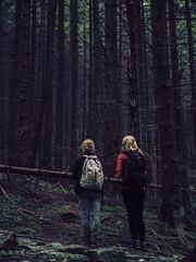 Kondracka Kopa-52 (wichrzu_wichrzu) Tags: forest tatry summer poland magic dark gold enoftheworld travel nature