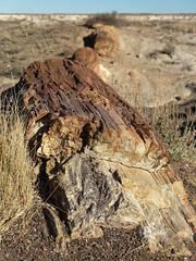 Crystal Forest Trail (Zruda) Tags: arizona geo:lat=3486668462 geo:lon=10978863188 geotagged headquarters petrifiedforestnatlpk unitedstates usa