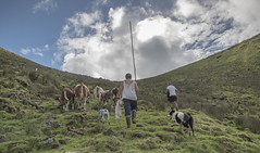 Heavenly climb (biktoras07) Tags: portugal azores açores ilhadocorvo corvo island sky volcano volcanic shepherd cattle dog cow people outdoor outside nature green whi grey blue pasture victorsantos rod climb autumn atlantic ocean ociidental grupo westerngroup