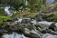Up Stream (Evoljo) Tags: riverglaslyn gwynedd river wales rocks water trees flow snowdonia mountains nikon d500