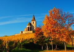 sonate d'automne (pietro68bleu) Tags: églisefortifiée alsace hautrhin vignoble vignes cielbleu couleursdautomne